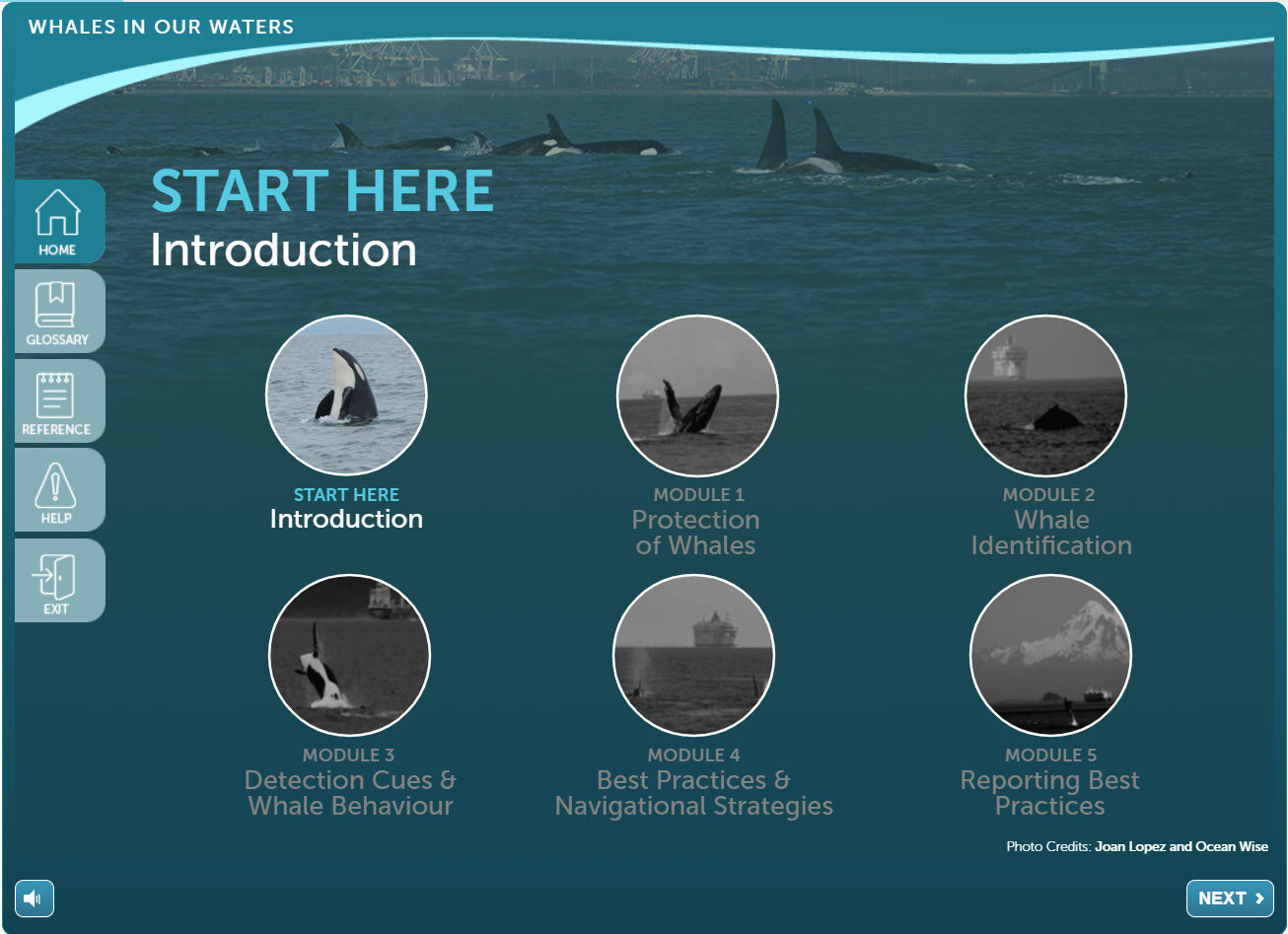 Whales-homepage